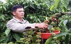 Le Vietnam cherche à élever la valeur ajoutée du café