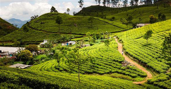 Le Sri Lanka authentique