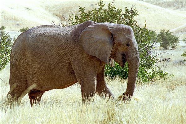 Sur la piste des éléphants